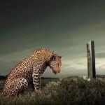 ролик тигр